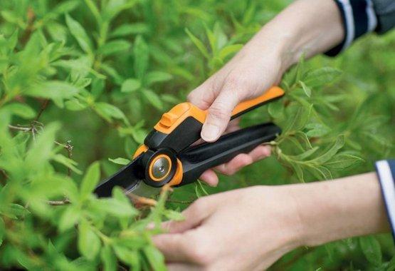 Hooldage puid ja põõsaid
