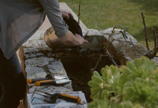Korras aed, tervislik aednik