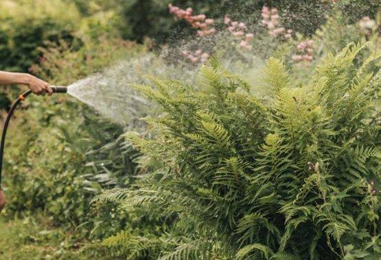 Valige taimed, mis sobivad teie kliimasse
